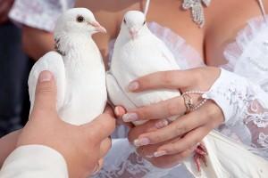 Tauben für das Brautpaar